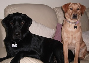 Archie And Polly On Sofa 071211