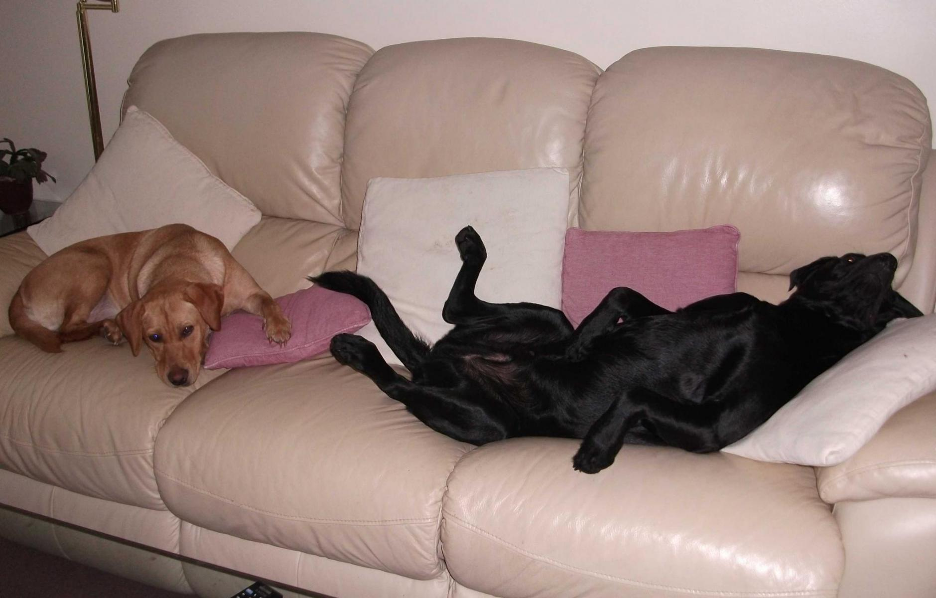 Archie And Polly On The Sofa